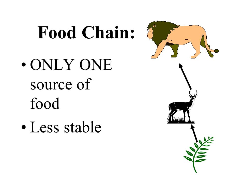 Food Chain: ONLY ONE source of food Less stable