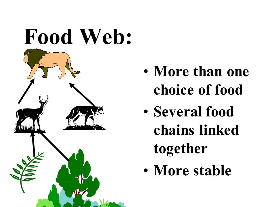Food Web: More than one choice of food Several food chains linked together More stable