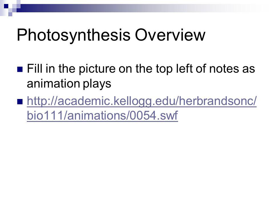 Photosynthesis Overview Fill in the picture on the top left of notes as animation plays http://academic.kellogg.edu/herbrandsonc/ bio111/animations/00