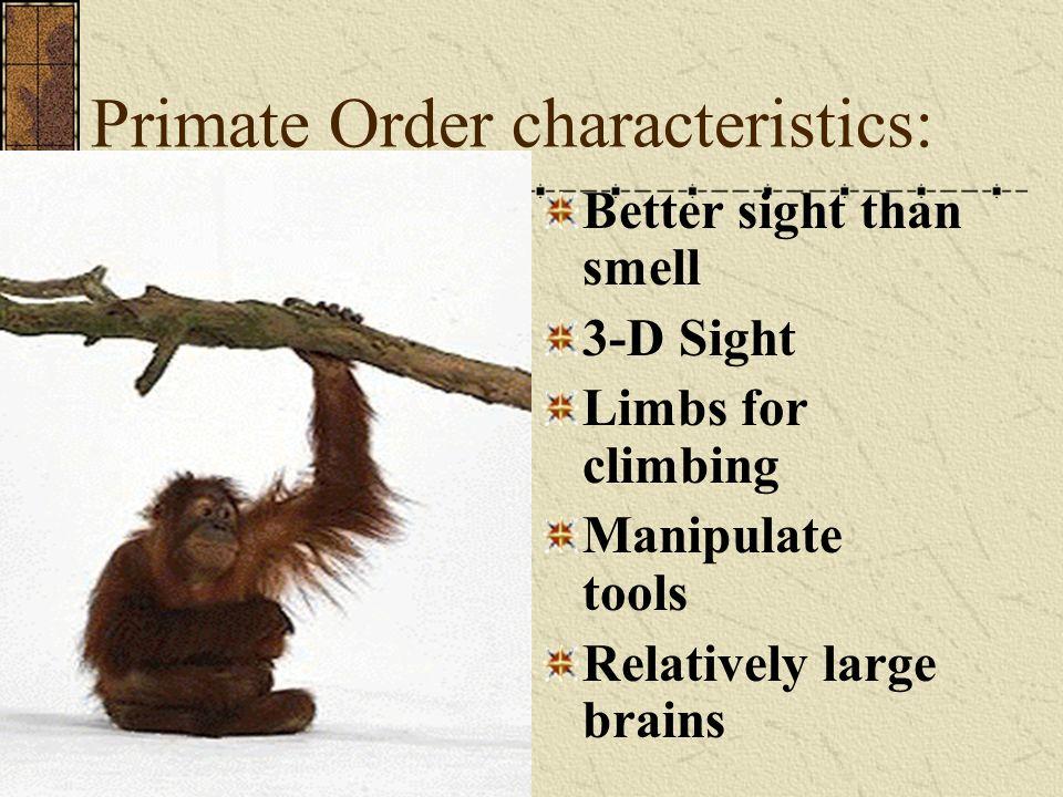 Human Classification Animal Kingdom Cordate Phylum Mammal Class Primate Order Hominoid Family Homo Genus sapiens speices