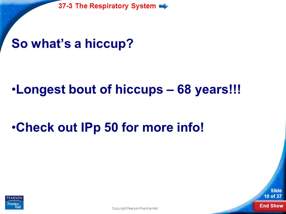 End Show 37-3 The Respiratory System Slide 10 of 37 Copyright Pearson Prentice Hall So whats a hiccup.