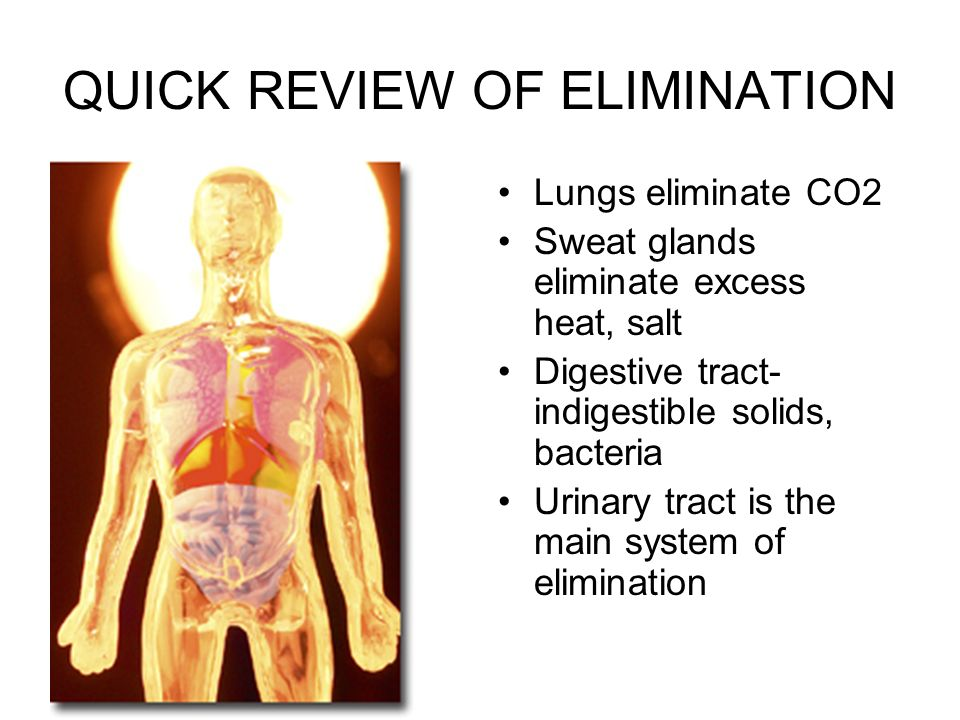 QUICK REVIEW OF ELIMINATION Lungs eliminate CO2 Sweat glands eliminate excess heat, salt Digestive tract- indigestible solids, bacteria Urinary tract