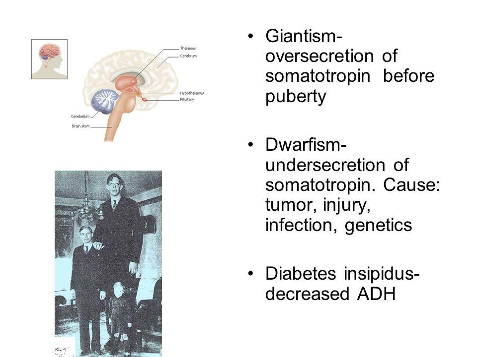Giantism- oversecretion of somatotropin before puberty Dwarfism- undersecretion of somatotropin. Cause: tumor, injury, infection, genetics Diabetes in