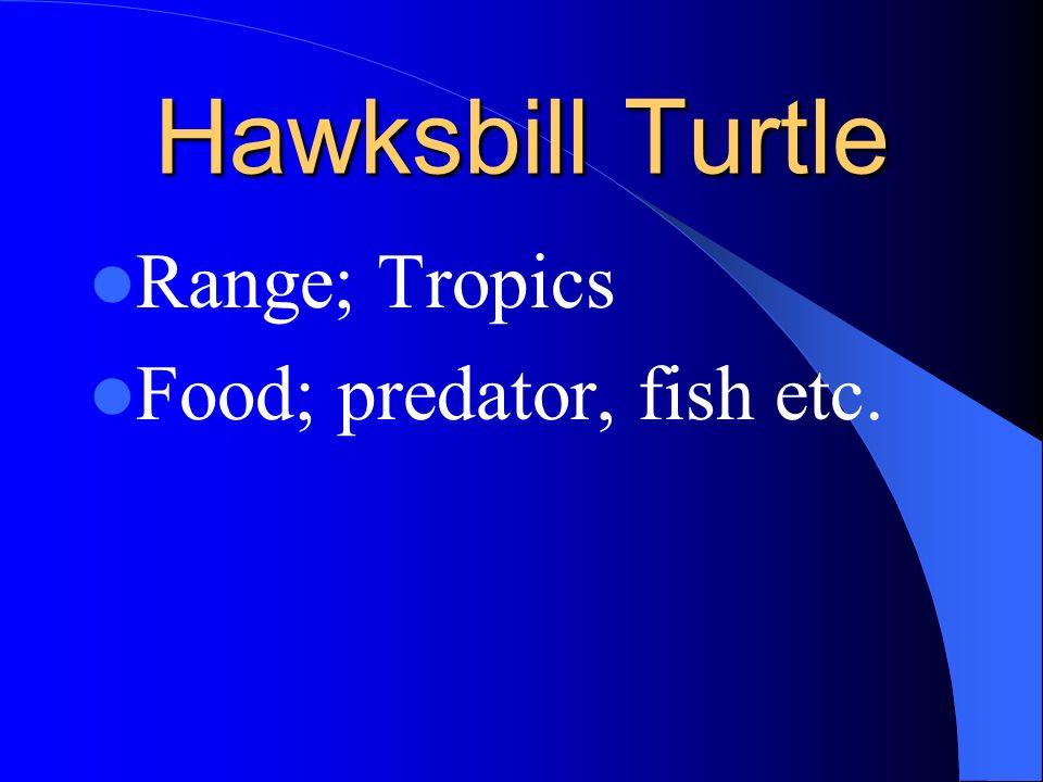 Pacific Ridley Turtle Range; N. Baja Mex. To tropics Food; sea weed, Mollusks, urching