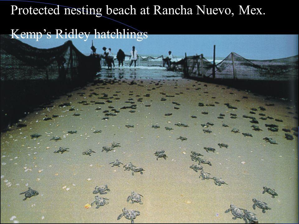 Antonio Resendiz, Bahia de Los Angeles