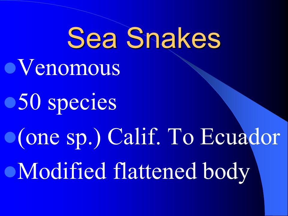 Crocodiles; marine sp. Saltwater Crocodiles; Florida, Australia, Asia Africa Crocodiles have specialized 4 chambered heart