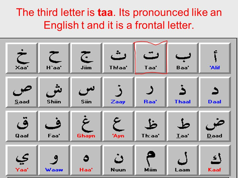 The third letter is taa. Its pronounced like an English t and it is a frontal letter.
