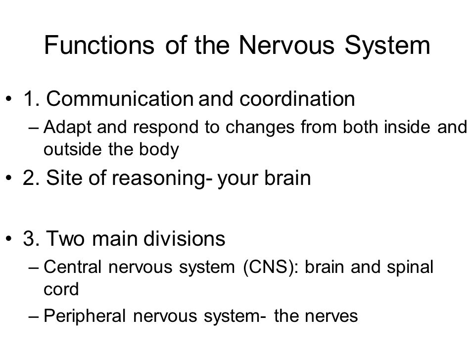 Functions of the Nervous System 1.