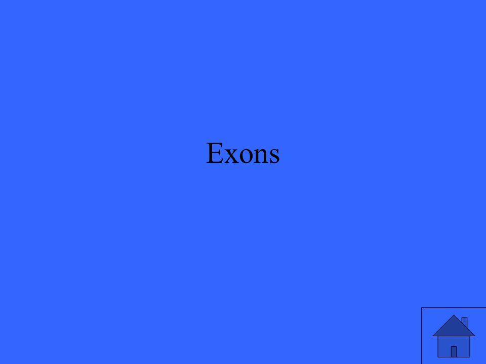 Exons