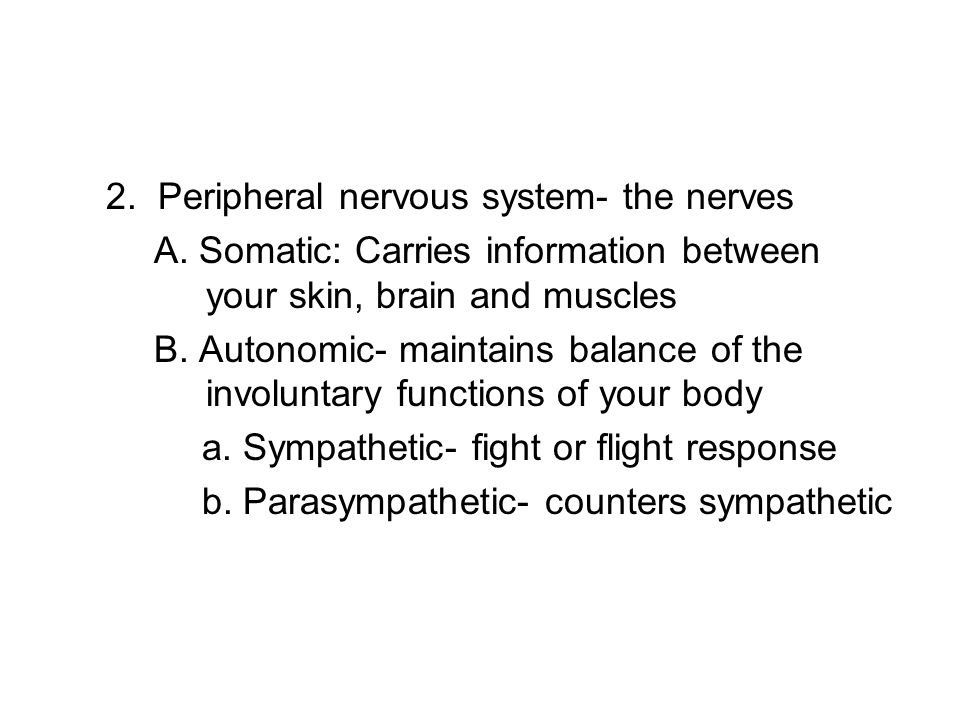 2. Peripheral nervous system- the nerves A.