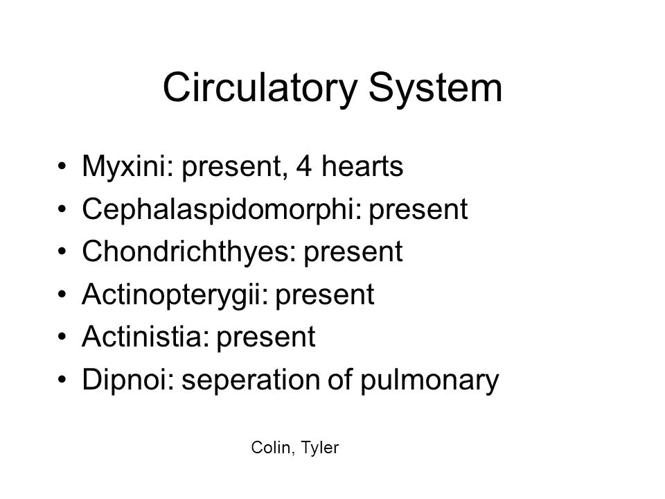 Circulatory System Myxini: present, 4 hearts Cephalaspidomorphi: present Chondrichthyes: present Actinopterygii: present Actinistia: present Dipnoi: s