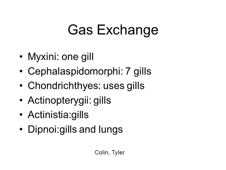 Gas Exchange Myxini: one gill Cephalaspidomorphi: 7 gills Chondrichthyes: uses gills Actinopterygii: gills Actinistia:gills Dipnoi:gills and lungs Col