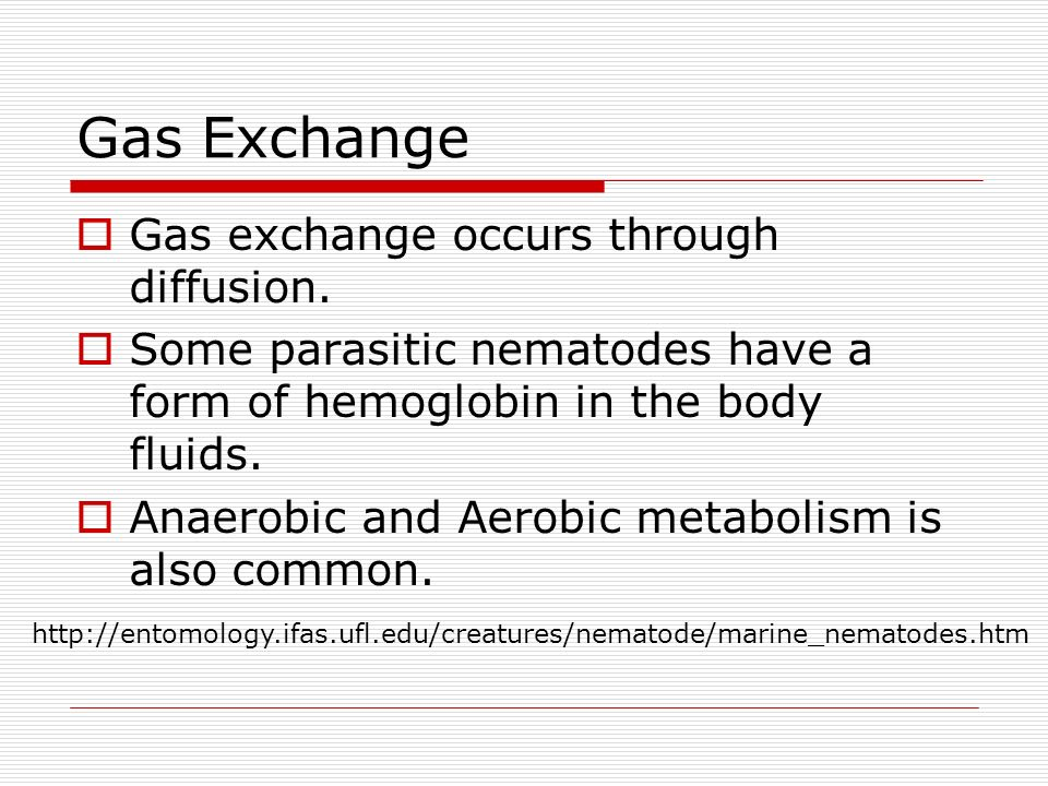 Gas Exchange Gas exchange occurs through diffusion. Some parasitic nematodes have a form of hemoglobin in the body fluids. Anaerobic and Aerobic metab