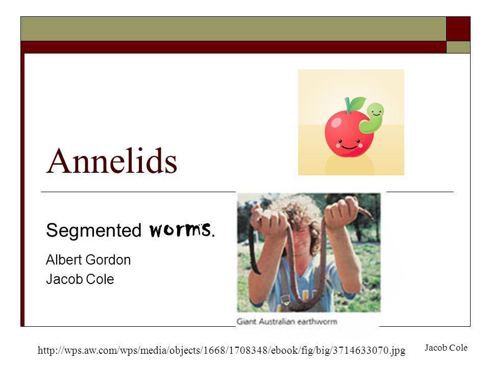 Annelids Segmented worms. Albert Gordon Jacob Cole http://wps.aw.com/wps/media/objects/1668/1708348/ebook/fig/big/3714633070.jpg Jacob Cole