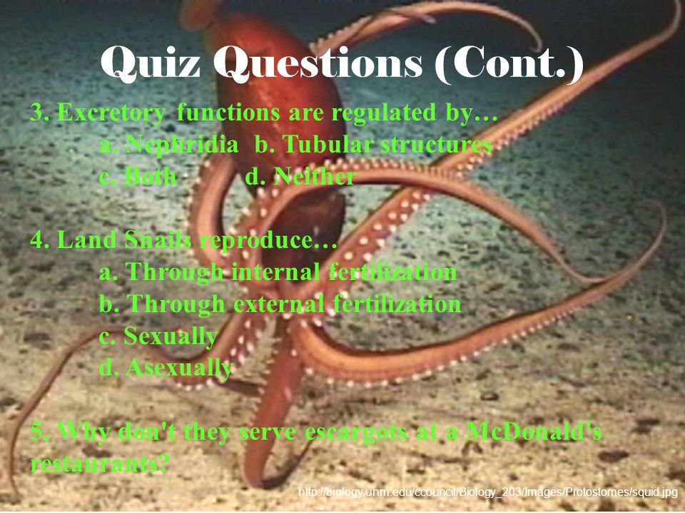 Quiz Questions (Cont.) 3. Excretory functions are regulated by… a. Nephridia b. Tubular structures c. Both d. Neither 4. Land Snails reproduce… a. Thr