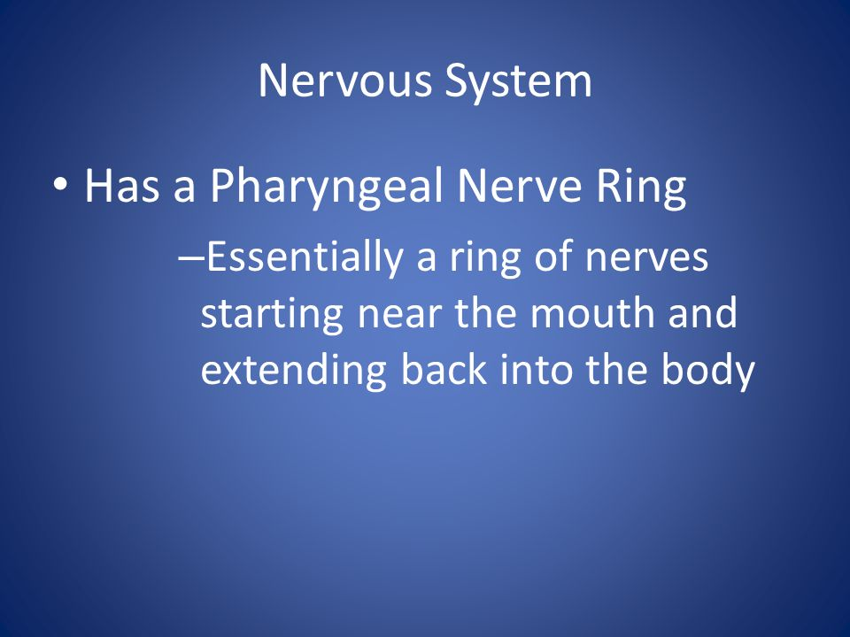 Nervous System Has a Pharyngeal Nerve Ring – Essentially a ring of nerves starting near the mouth and extending back into the body