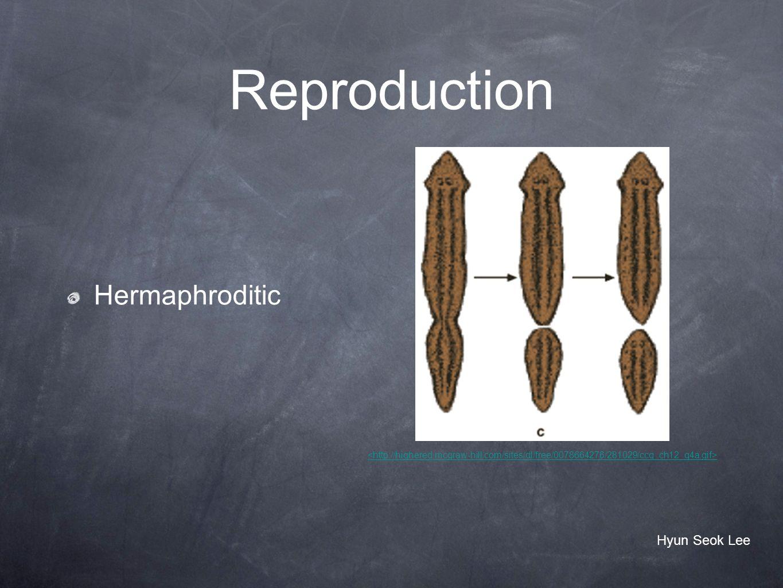 Reproduction Hermaphroditic Hyun Seok Lee