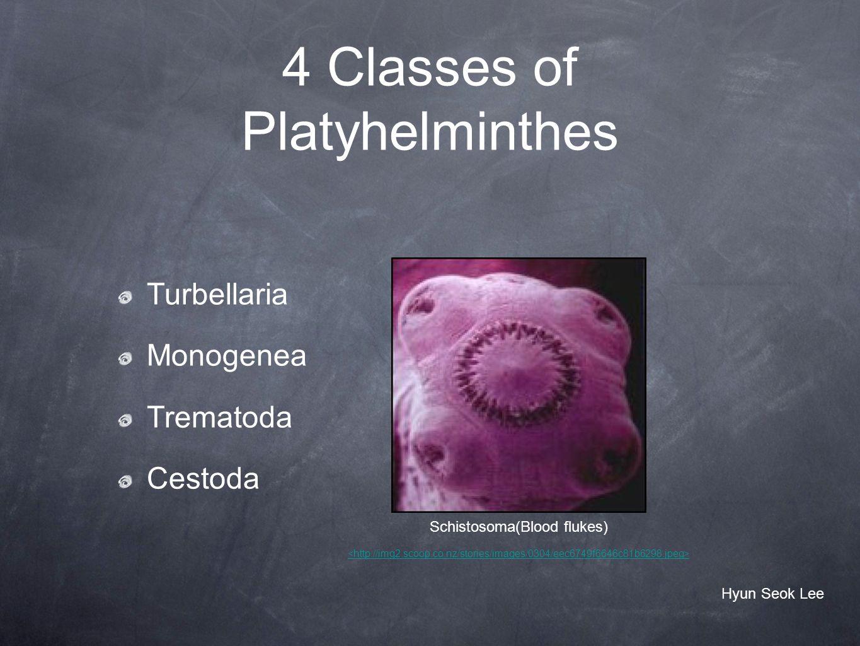 4 Classes of Platyhelminthes Turbellaria Monogenea Trematoda Cestoda Schistosoma(Blood flukes) Hyun Seok Lee