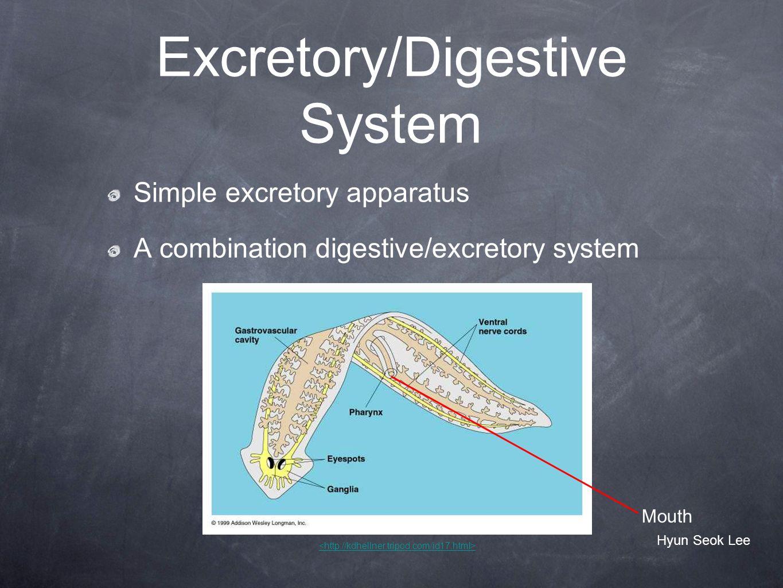 Excretory/Digestive System Simple excretory apparatus A combination digestive/excretory system Mouth Hyun Seok Lee
