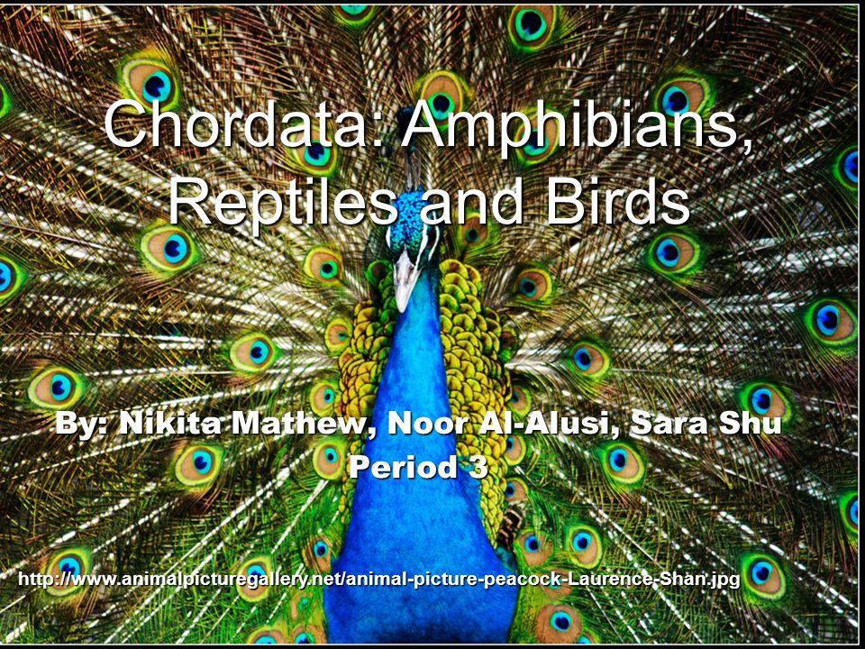 By: Nikita Mathew, Noor Al-Alusi, Sara Shu Period 3 http://www.animalpicturegallery.net/animal-picture-peacock-Laurence-Shan.jpg Chordata: Amphibians,