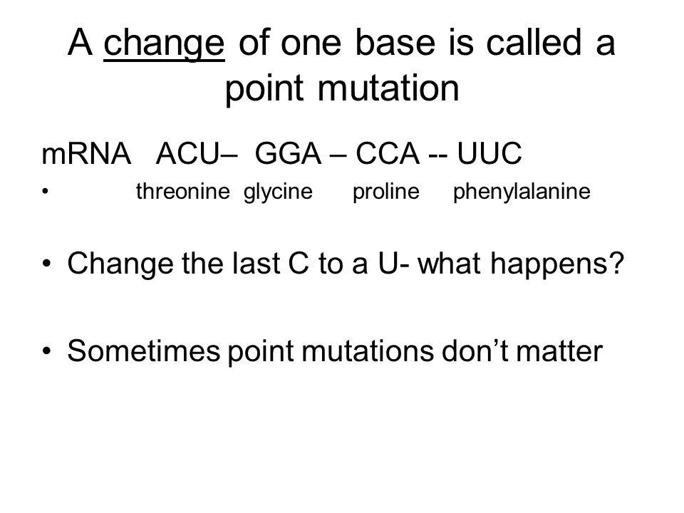 A change of one base is called a point mutation mRNA ACU– GGA – CCA -- UUC threonine glycine proline phenylalanine Change the last C to a U- what happ