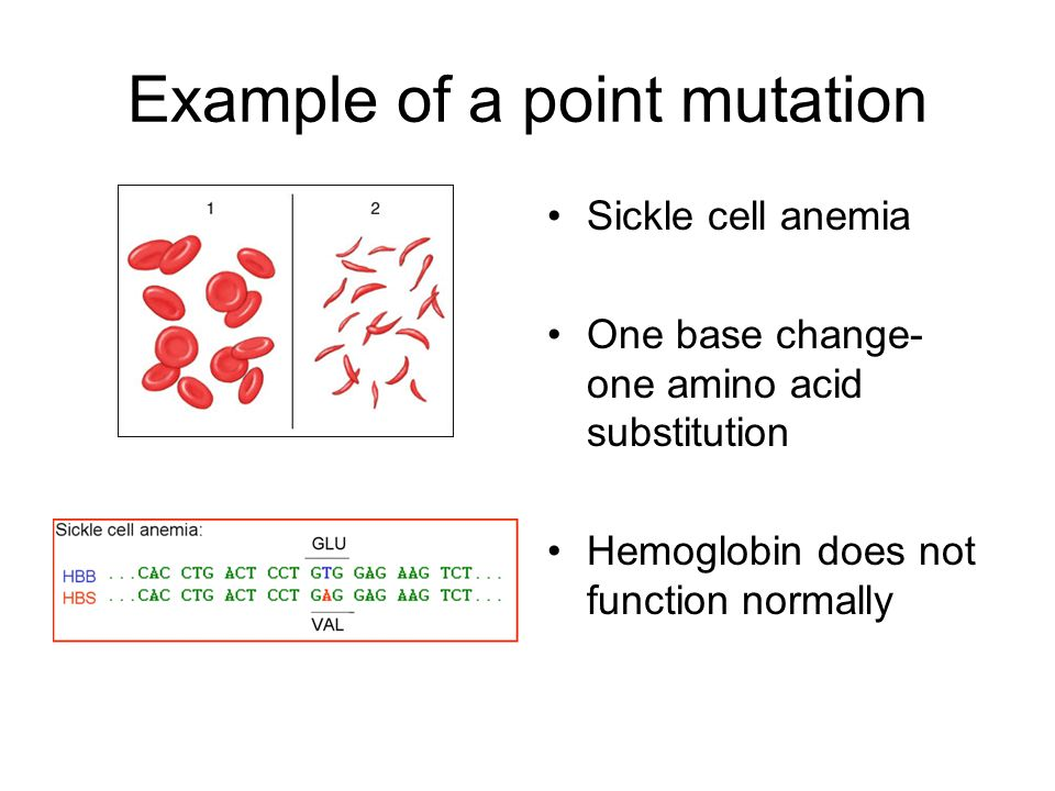 Example of a point mutation Sickle cell anemia One base change- one amino acid substitution Hemoglobin does not function normally