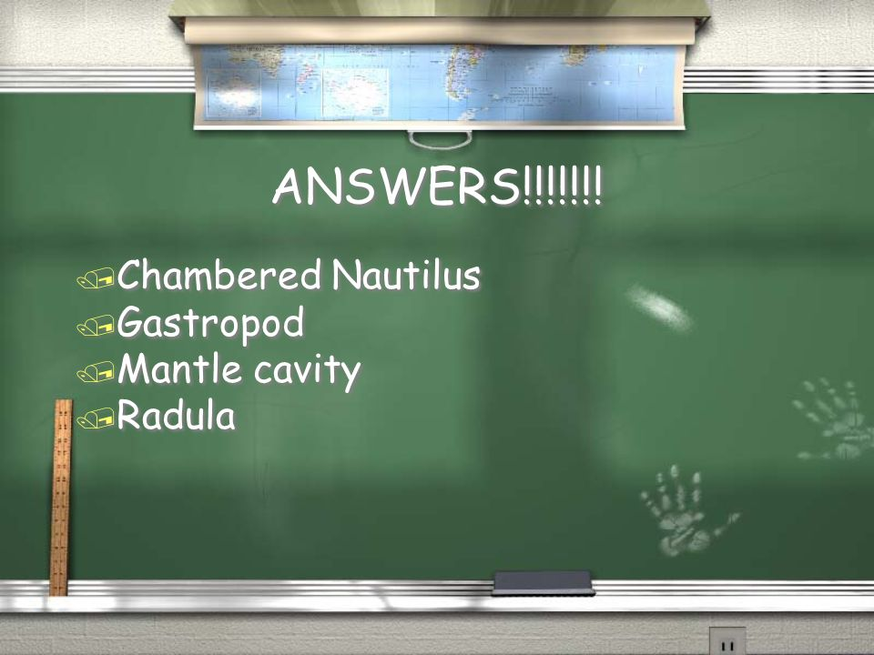 ANSWERS!!!!!!! / Chambered Nautilus / Gastropod / Mantle cavity / Radula / Chambered Nautilus / Gastropod / Mantle cavity / Radula