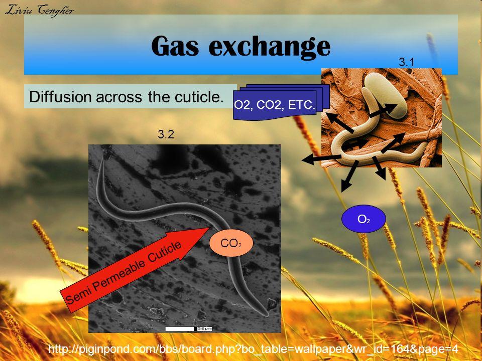 Gas exchange Diffusion across the cuticle. O2, CO2, ETC. Semi Permeable Cuticle O 2 CO 2 Bibliography for this slide: 13.1 http://bioweb.uwlax.edu/bio