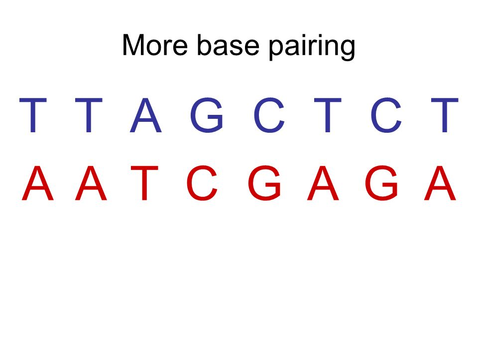 5 Steps to DNA Replication Step 1 Enzyme initiates (starts) replication and untwists the helix