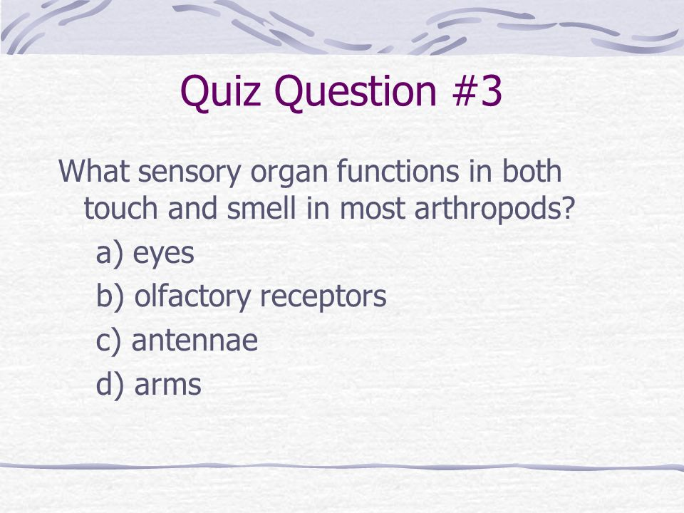 Quiz Question #3 What sensory organ functions in both touch and smell in most arthropods? a) eyes b) olfactory receptors c) antennae d) arms