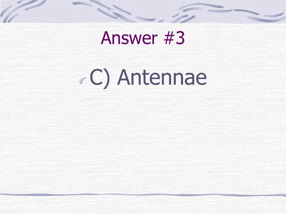 Answer #3 C) Antennae