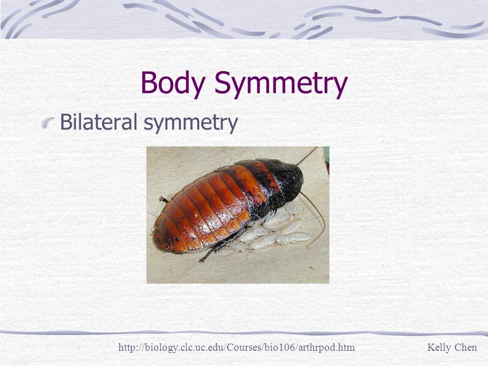 Body Symmetry Bilateral symmetry http://biology.clc.uc.edu/Courses/bio106/arthrpod.htmKelly Chen