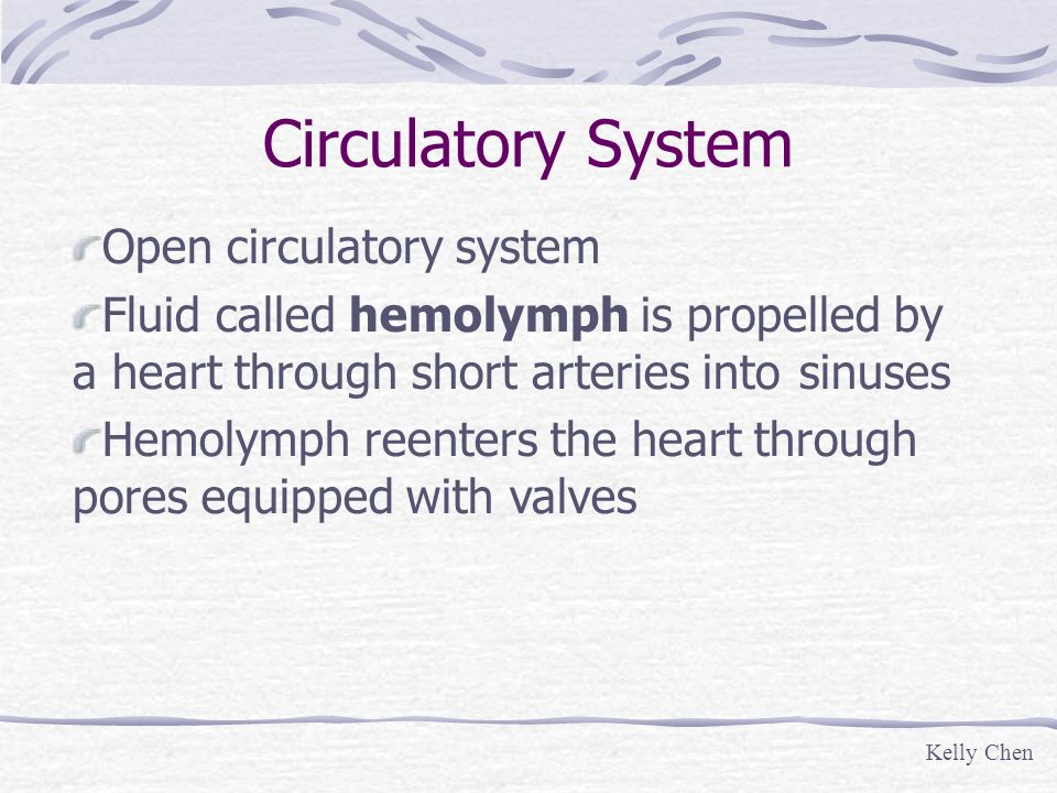 Circulatory System Open circulatory system Fluid called hemolymph is propelled by a heart through short arteries into sinuses Hemolymph reenters the h