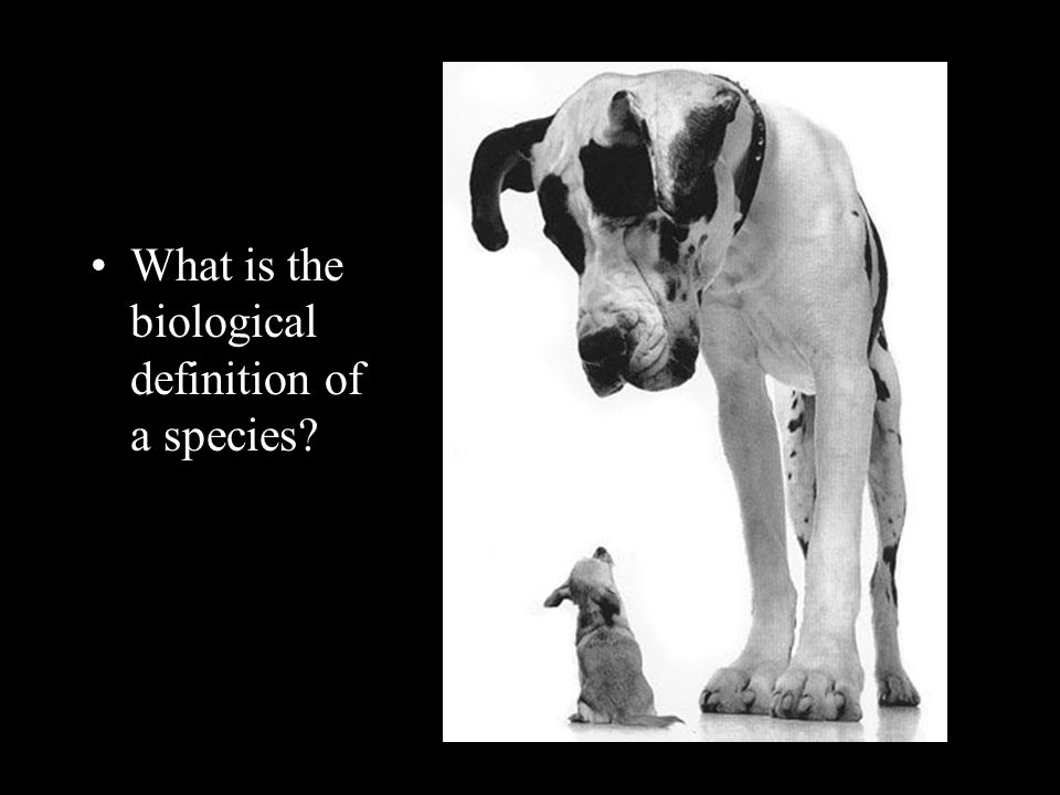 What is the biological definition of a species?