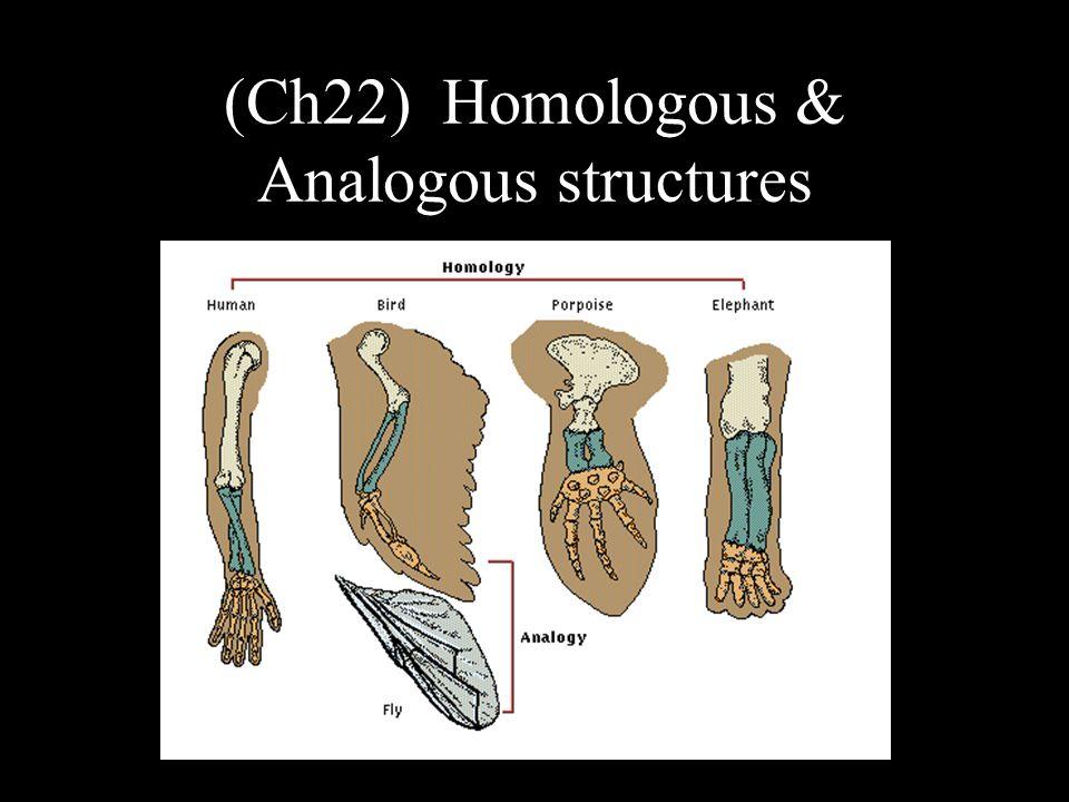 (Ch22) Homologous & Analogous structures