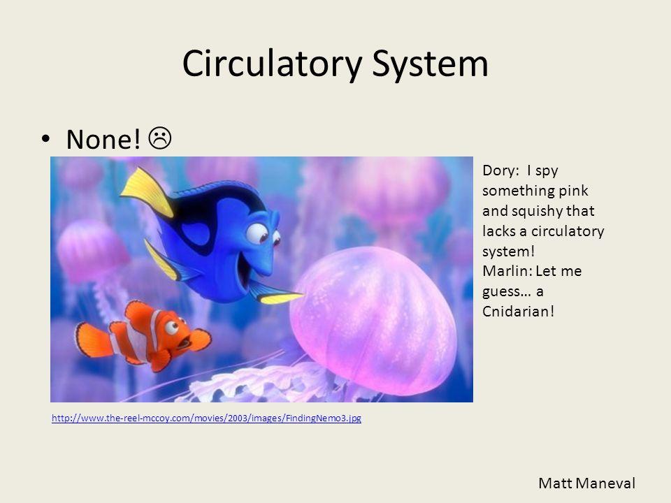 Circulatory System None! Matt Maneval Dory: I spy something pink and squishy that lacks a circulatory system! Marlin: Let me guess… a Cnidarian! http: