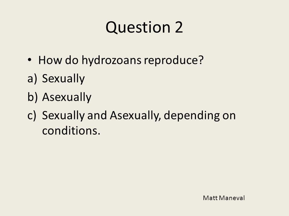 Question 2 How do hydrozoans reproduce? a)Sexually b)Asexually c)Sexually and Asexually, depending on conditions. Matt Maneval