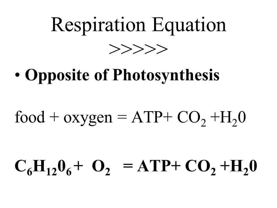 Cellular Respiration……….