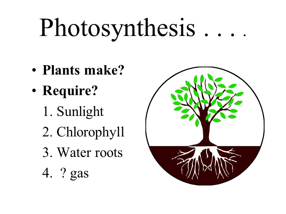 Photosynthesis.... Plants make? Require? 1. Sunlight 2. Chlorophyll 3. Water roots 4. ? gas