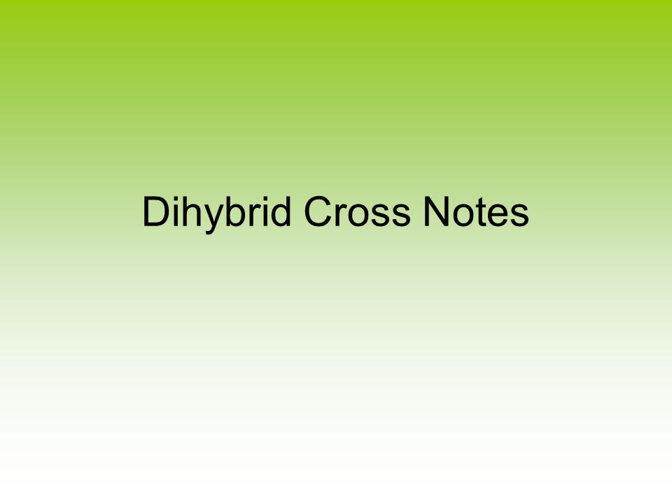 Dihybrid Cross Notes