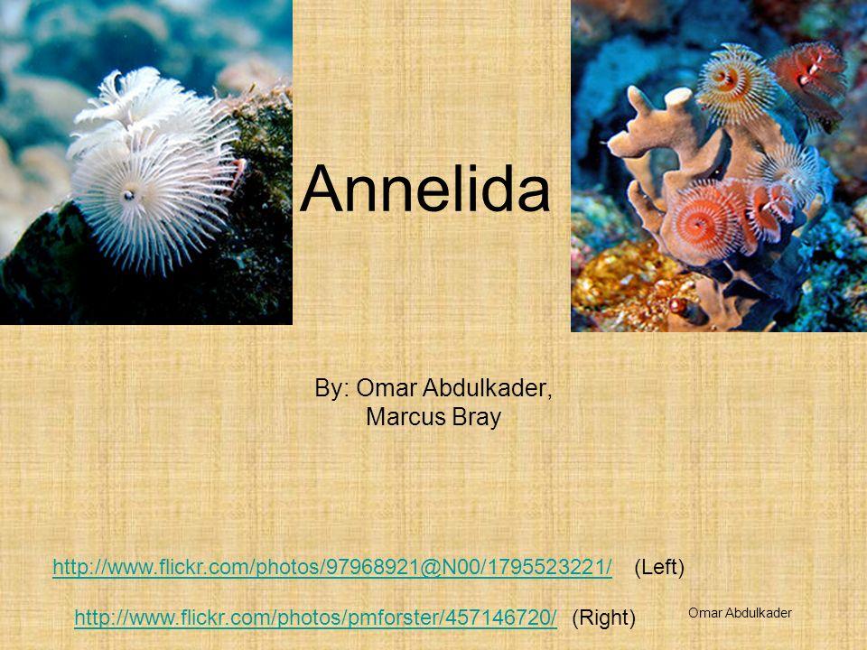 Annelida By: Omar Abdulkader, Marcus Bray http://www.flickr.com/photos/97968921@N00/1795523221/http://www.flickr.com/photos/97968921@N00/1795523221/ (