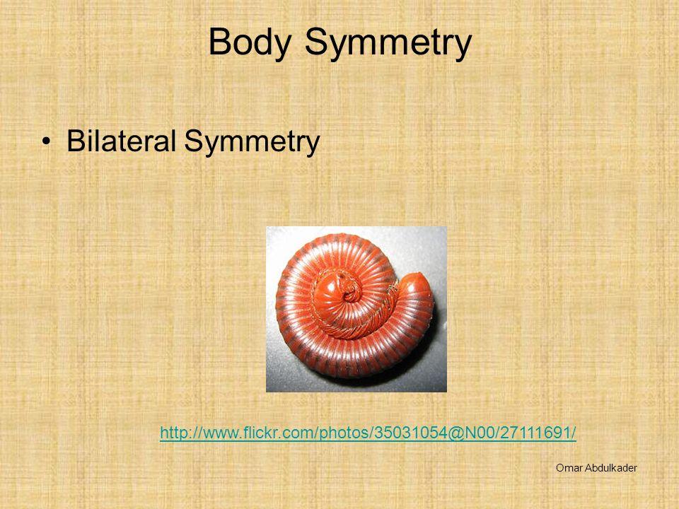 Body Symmetry Bilateral Symmetry Omar Abdulkader http://www.flickr.com/photos/35031054@N00/27111691/