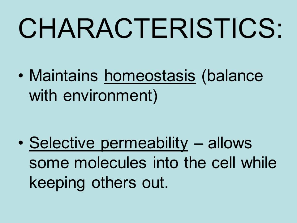CHARACTERISTICS: Maintains homeostasis (balance with environment) Selective permeability – allows some molecules into the cell while keeping others out.