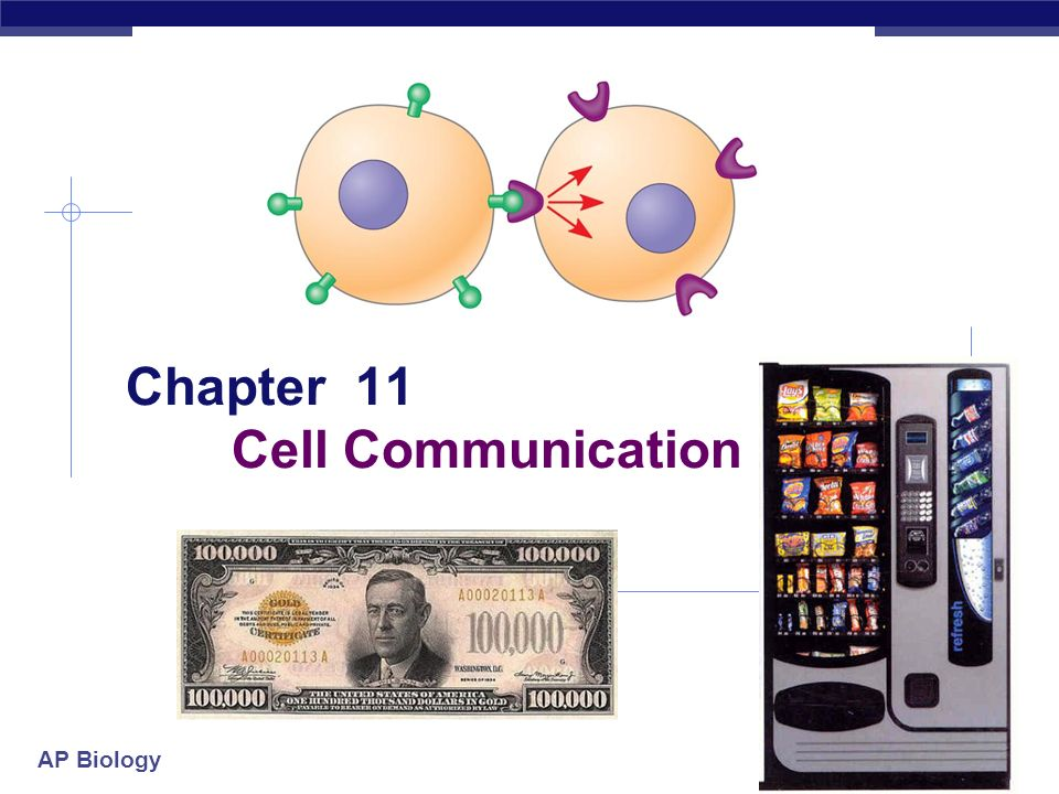 AP Biology Chapter 11 Cell Communication