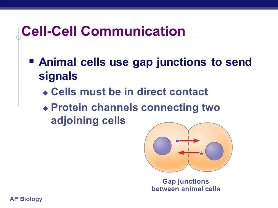 AP Biology First messenger Fig.