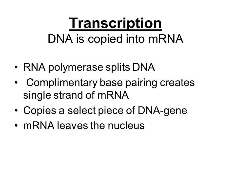 Transcription DNA is copied into mRNA RNA polymerase splits DNA Complimentary base pairing creates single strand of mRNA Copies a select piece of DNA-