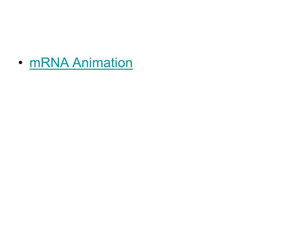 mRNA Animation