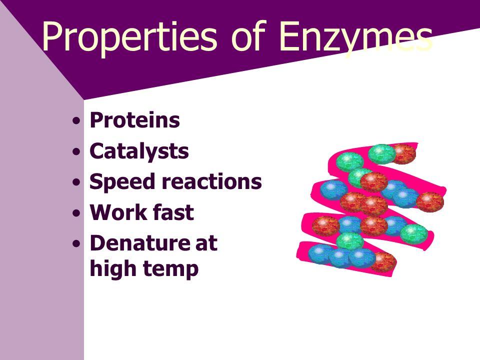Enzyme Lab Catalase Blood & Liver H 2 O 2 Toxic H 2 O 2 +catalase= H 2 O + O 2
