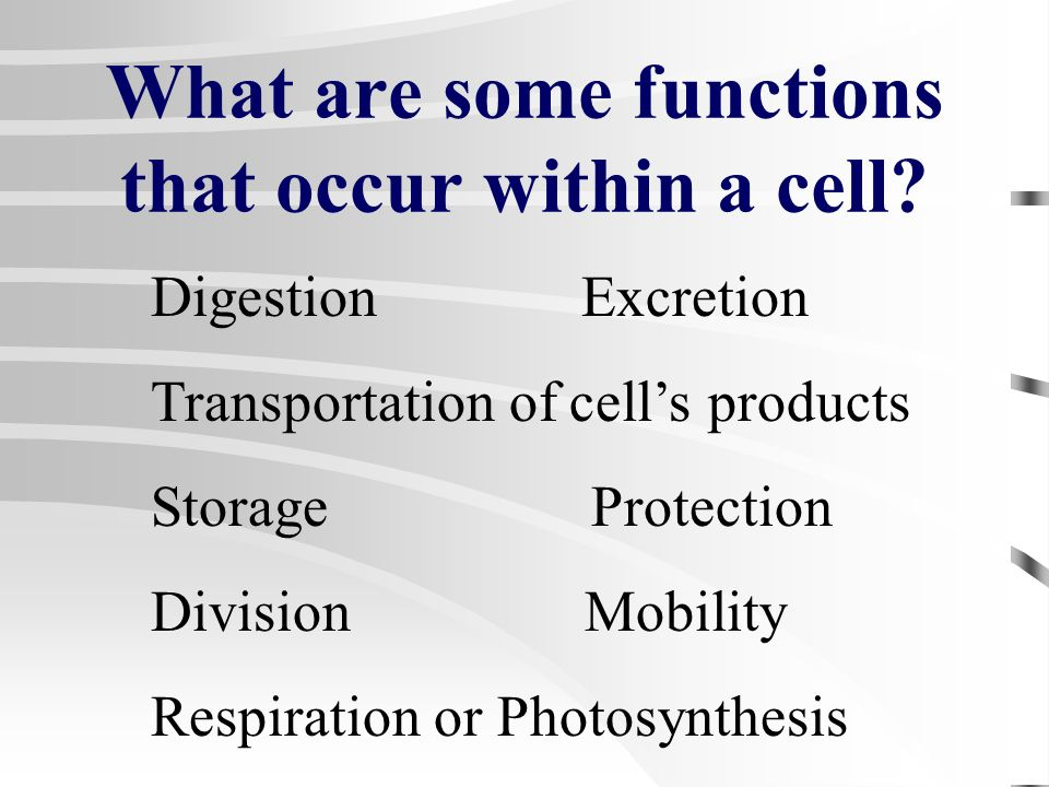 An Organelle Is: A minute structure within a plant or animal cell that has a particular job or function.