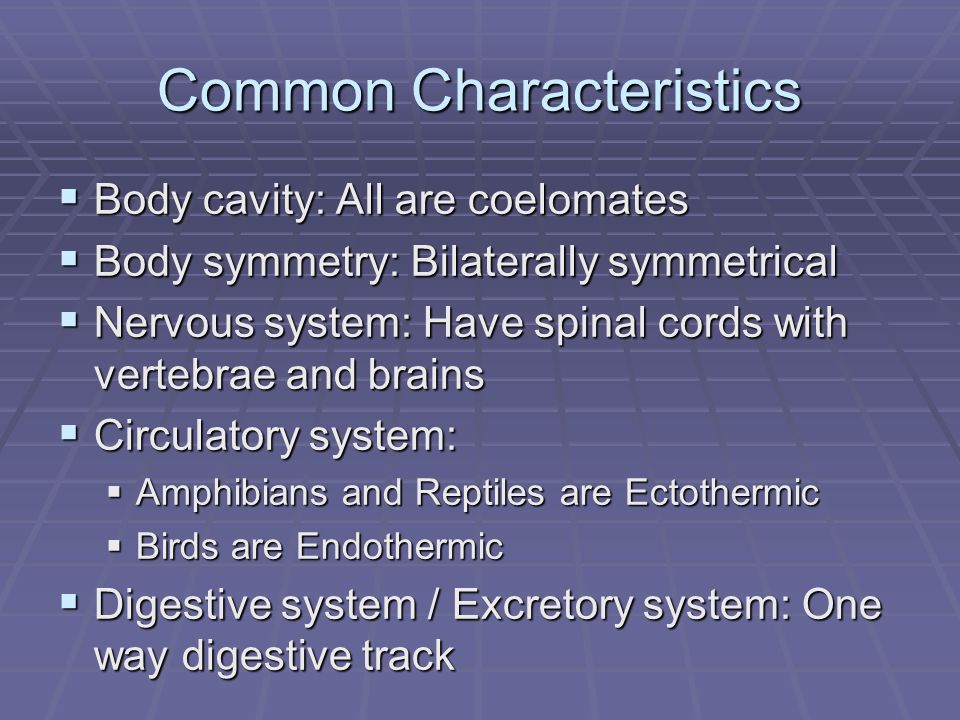 Common Characteristics Body cavity: All are coelomates Body cavity: All are coelomates Body symmetry: Bilaterally symmetrical Body symmetry: Bilaterally symmetrical Nervous system: Have spinal cords with vertebrae and brains Nervous system: Have spinal cords with vertebrae and brains Circulatory system: Circulatory system: Amphibians and Reptiles are Ectothermic Amphibians and Reptiles are Ectothermic Birds are Endothermic Birds are Endothermic Digestive system / Excretory system: One way digestive track Digestive system / Excretory system: One way digestive track